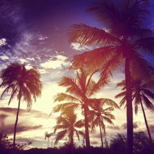 Barbados Palm Tree Sunset