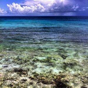 Barbados Snorkelling