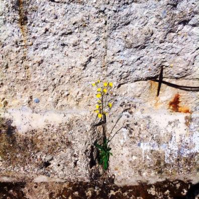 Berlin Wall Flower