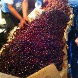 Cherry Market