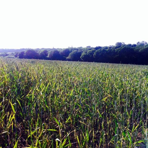 Kent Countryside