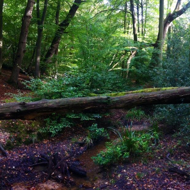 Burnham Beaches Wood