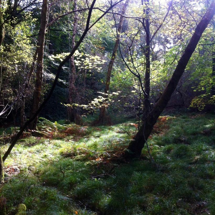Burnham Beeches Walk