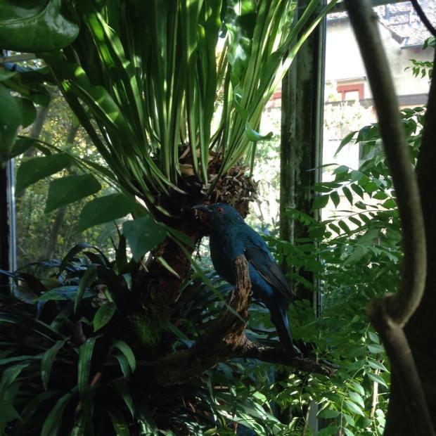 Basel Botanical Gardens