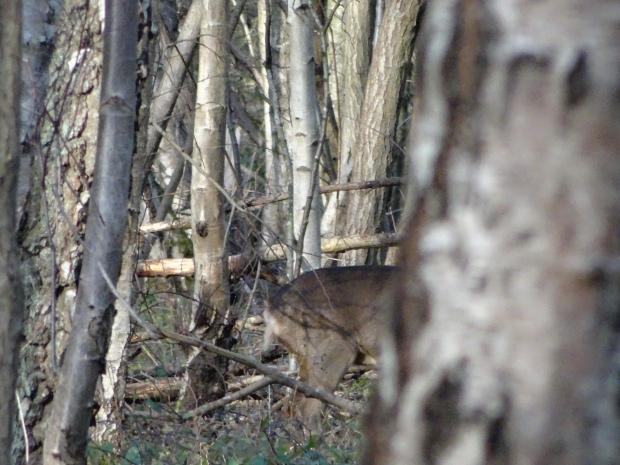 Deers Buckinghamshire