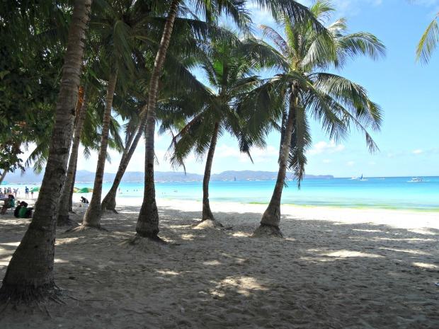 5 Boracay Beach Palms