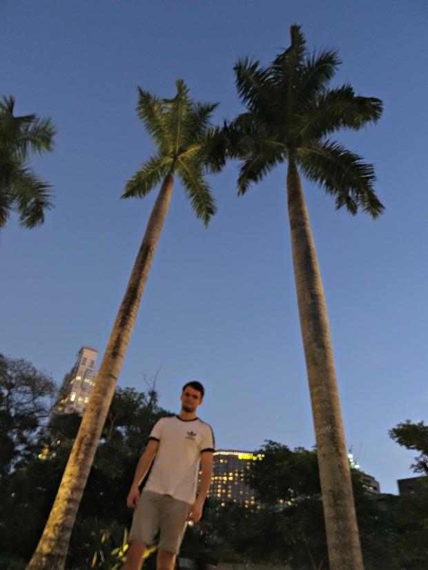 manila park palm trees