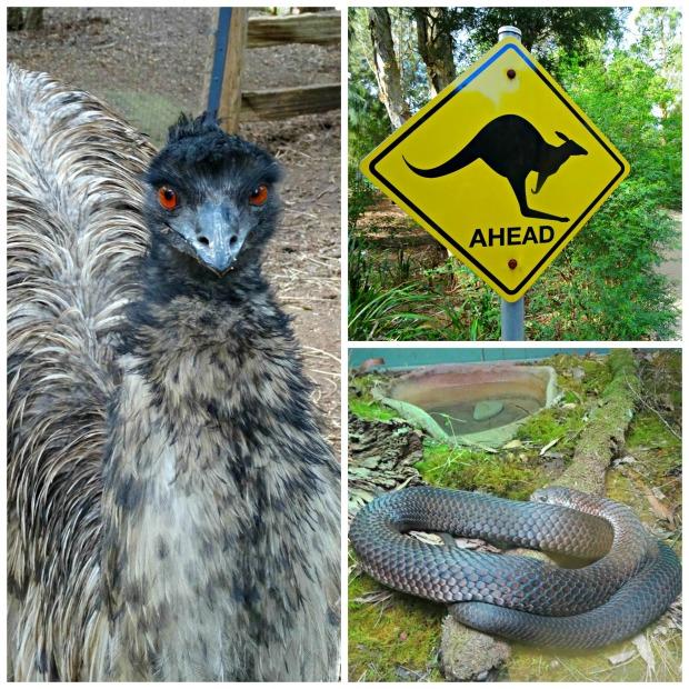 Healesville Collage 4